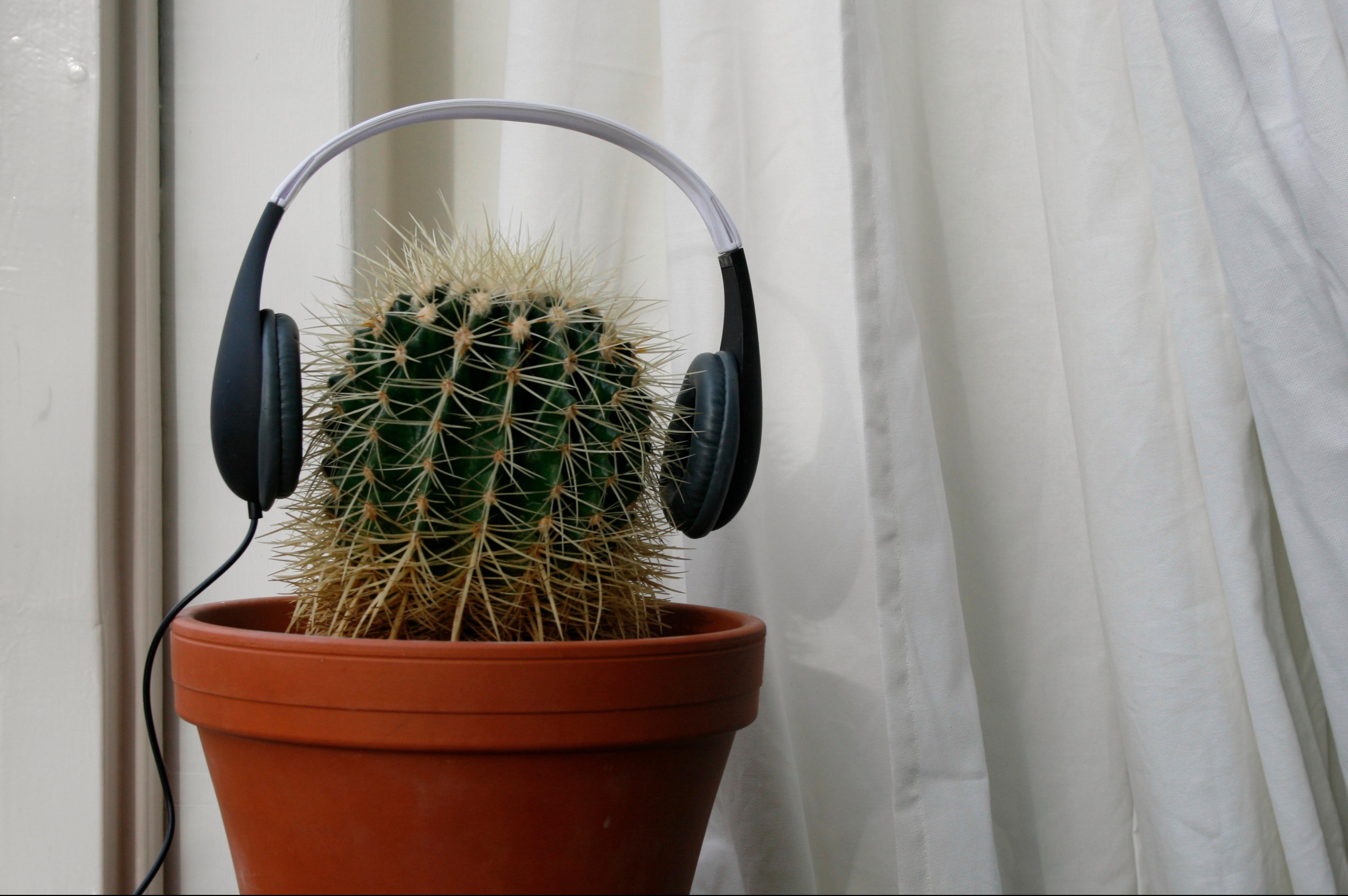 podcast cactus