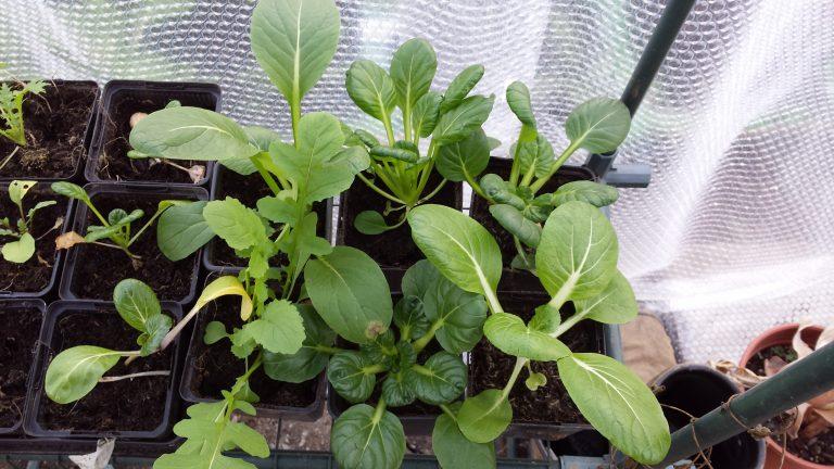 Test: Plantengier