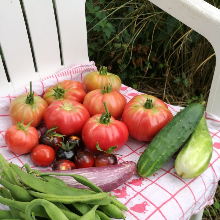 Heirloom tomaten review: Pink Brandywine