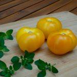 azoychka tomaten met oregano